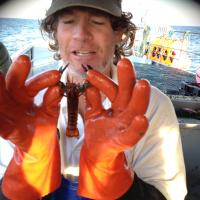 Lobster research