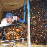Offloading lobsters